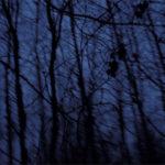 Dragos Alexadrescu: Nature of Fear