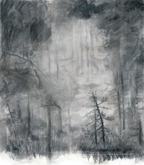 Metsän siimes