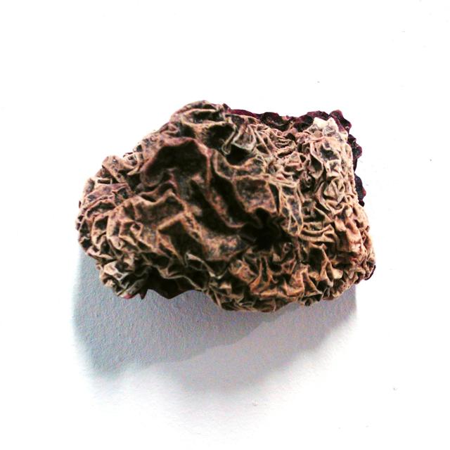 KN: Grandma's Mummified Fruit, 2009