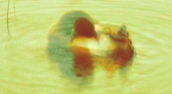Laura Mela: Kaislikko soi, stillkuvia videoinstallaatiosta